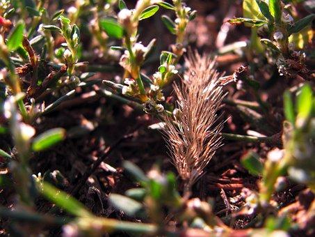 Grass, Plants, Nature, Summer, Green Grass, Greens
