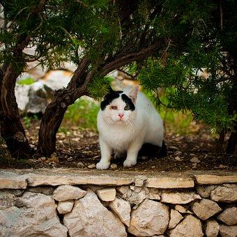 Harm, Cat, One-eyed, Poor Guy, Futrzak, Kitten, White