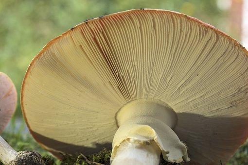 Matryoshka, Red Fly Agaric Mushroom, Mushrooms