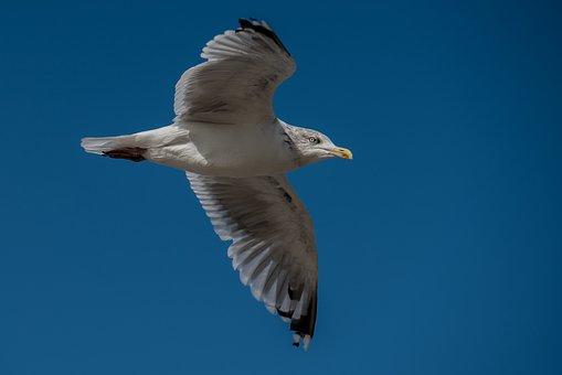 Seagull, Bird, Water, Birds, Water Bird, Seevogel