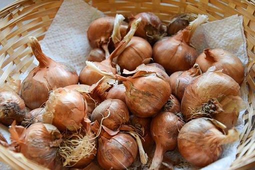 Shallots, Spices, Kitchen, Basket, Harvest, Food