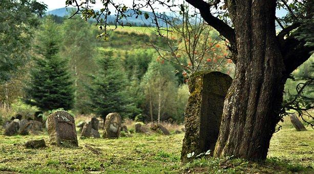 Cemetery, Lutowiska, Jewish, Matzeva, Tree, History