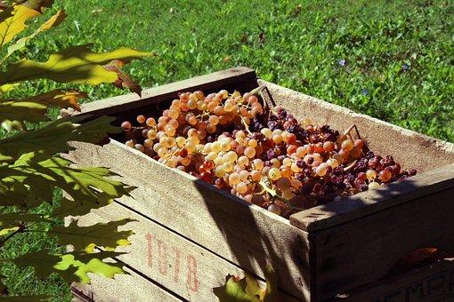 Vintage, Grapes, Autumn, Wooden Box, Vinification
