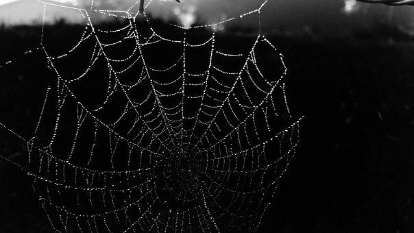 Cobweb, Web, Black, Dew, Black And White, Belize