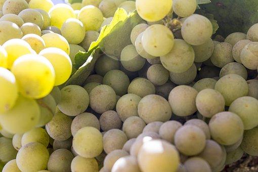 Grapes, Cluster, Wine, Fruit, Vine, Green, Parra