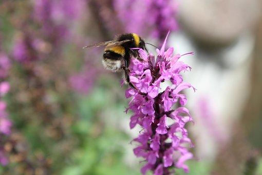 Bee, Summer, Pollination, Pollen, Spring, Garden