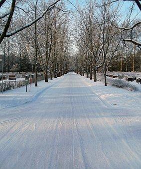 Road, Alley, Wood, Cemetery, Snow, Winter, Helsinki