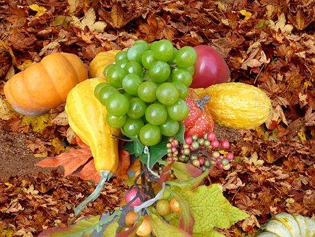 Boxer Shorts, Herbstdeko, Leaves, Fall Leaves, Autumn