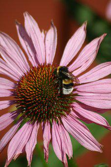 Flower, Insect, Bumblebee