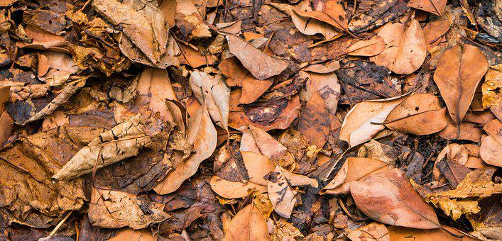 Leaf, Leaves Wither, Autumn, Withered, Flora, Forest