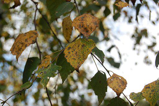 Leaf, Autumn, Leaves, Golden Autumn, Nature, Tree