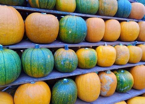 Pumpkins, Line, Yellow, Green
