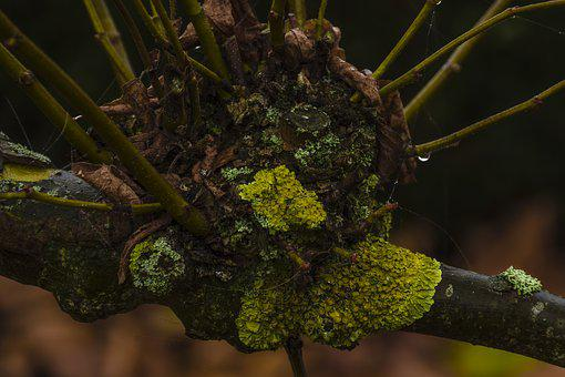 Lichen, Trees, Moss, Plant, Nature, Texture, Trunk
