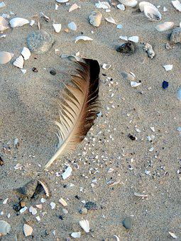 Bird Feather, Mussels, Most Beach, By The Sea, Nature
