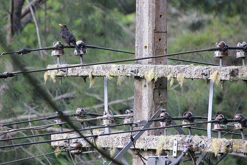 Telegraph Pole, Bird, Bush, Wire, Nature, Wildlife