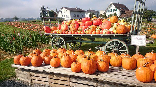 Called Rothmans, Pumpkins, Orange, Autumn, Collections