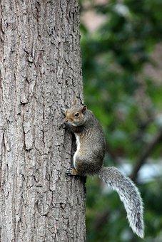 Squirrel, Tree, Bark, Animal, Nature, Wildlife, Forest