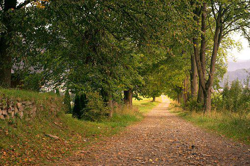 Way, Alley, Dirt Road, Tree, Old Wall, Foliage