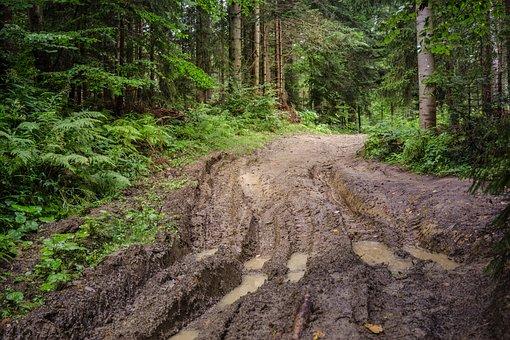 Forest, Way, Mud, Track, Tree