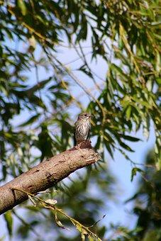 Animal, Autumn, Wood, Green, Little Bird