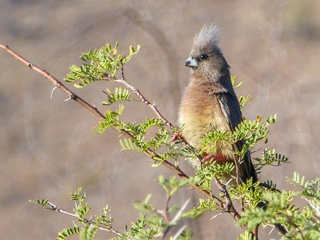 Bird, Parrot, Branch, Wilderness, Africa, Green, Hood