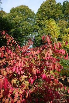 Autumn, Leaves, Bush, Seasons, Colorful, Nature