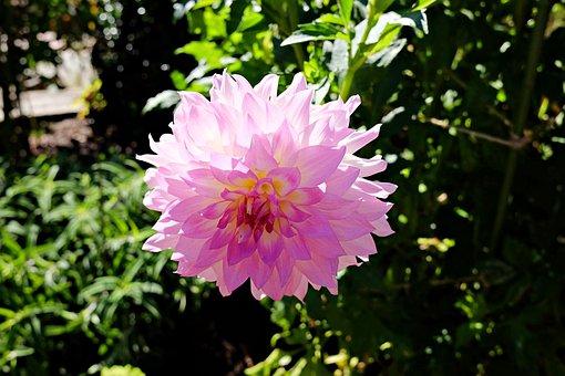 Flower, Garden, Nature, Longwood Garden