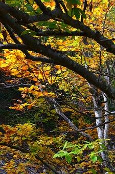 Autumn, Foliage, Underwood, Forest, Nature