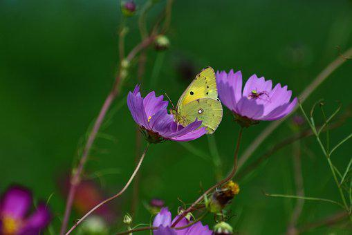 Natural, Landscape, Flowers, Insect, Butterfly