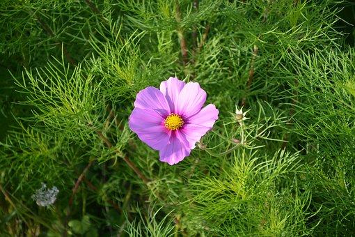 Flower, Flowers, Color Pink Green, Nature, Blue Sky