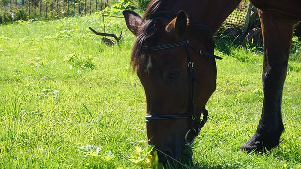 Horse, Farm, Animal, Nature, Mammal, Stallion, Ranch