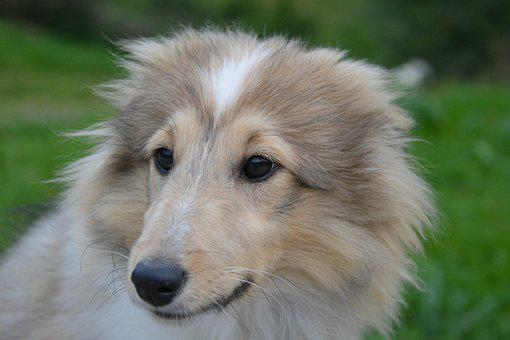 Dog, Puppy, Young Female, Long Snout, Next Dog, Mascot