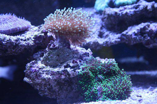 Coral, Leather Coral, Polyps, Disc Anemone, Sea