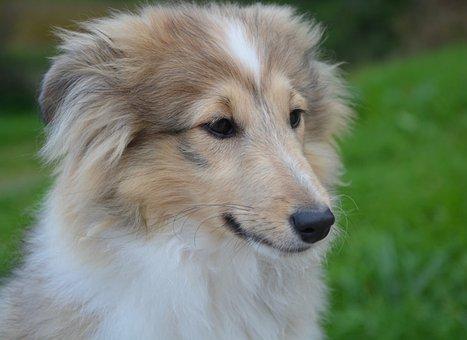 Dog, Bitch Young Dog, Puppy, Portrait Profile