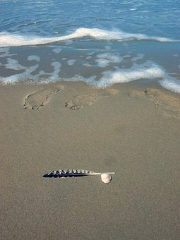 Feather, Sand, Footprint, Water, Beach, Nature