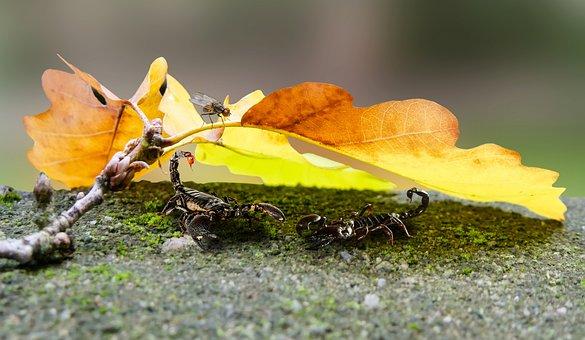 Nature, Animals, Scorpions, Leaf, Autumn, Hidden, Sting