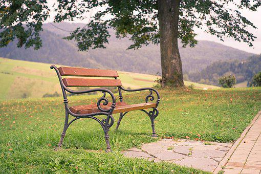 Bench, Park, Tree, Alley, View, Rest, Summer, Wooden