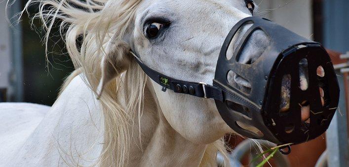 Mold, Horse, Animal, Muzzle, White Horse, White
