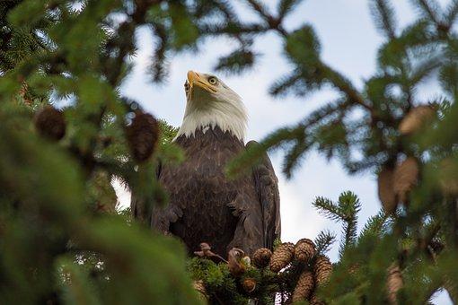 Adler, Raptor, Bird Of Prey, Bird, Feather, Close