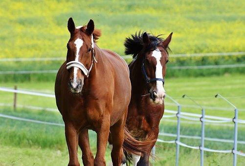 Horses, For Two, Coupling, Stallion, Eat, Paddock