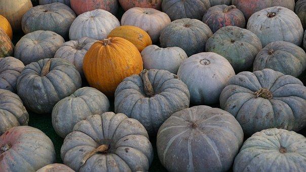 Pumpkin, Fall, Autumn, Orange, Halloween, Holiday