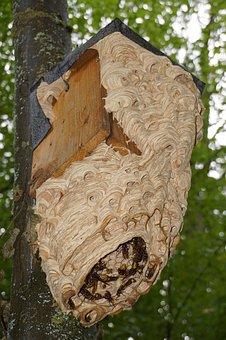 Hornissennest, Hornet, Insect, Animal, Entry Hole