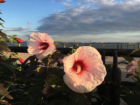 Flowers, Liberty State Park, Clouds
