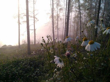Flower, Peltosaunio, Morning, Fog, Sunrise, Nature