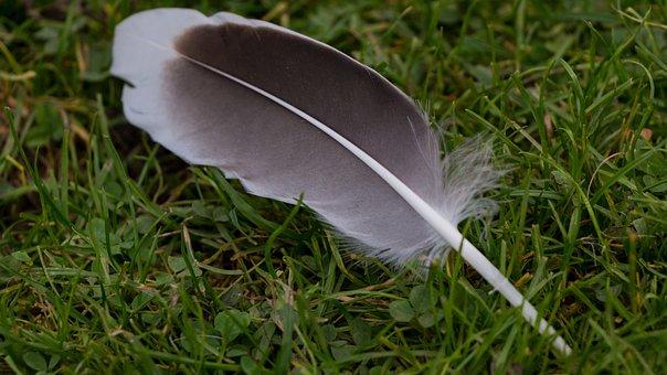 Feather, Meadow, Duck, Nature, Animal, Grass, Bird