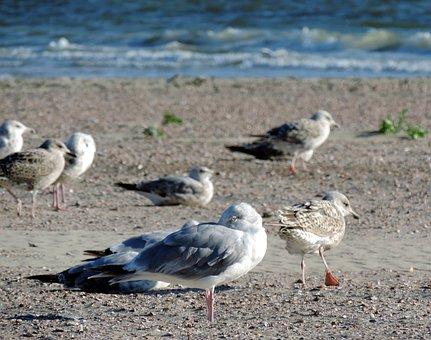 Gulls, Beach, Sea, North Sea, Sand Beach, Holiday