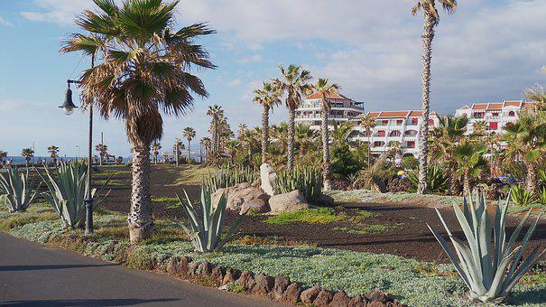 Palms, Tenerife, Spring, Overview