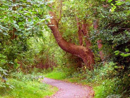 Tree, Shrubs, Nature, Green, Landscape, Away, Promenade