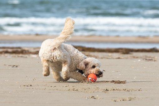 Beach, North Sea, Most Beach, Sea, Coast, Summer
