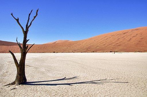 Namibia, Death Vlei, Tree, Desert, Shadow, Sesriem
